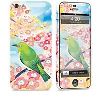 Недорогие Защитные плёнки для экрана iPhone-1 ед. Наклейки для Защита от царапин Масляный рисунок Узор PVC iPhone 5c