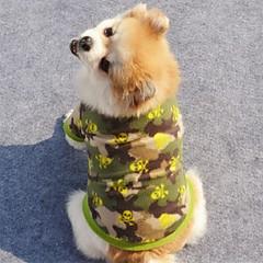お買い得  犬用ウェア&アクセサリー-犬 コート 犬用ウェア スカル フリース コスチューム ペット用 男性用 女性用 ホリデー ファッション ハロウィーン
